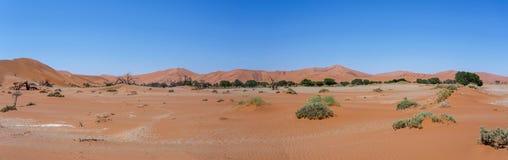 Härligt landskap av gömda Vlei i panorama för Namib öken Arkivbild