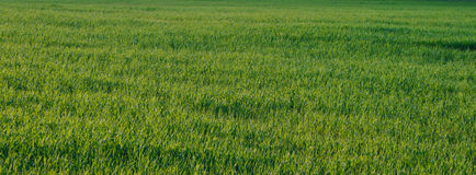 Härligt landskap av gräsplan Fotografering för Bildbyråer