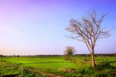 Härligt landskap av jordbruks- land arkivbild