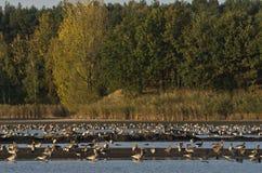 Härligt landskap av Polen Arkivfoto
