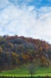 Härligt landskap av skogen och himmel Fotografering för Bildbyråer