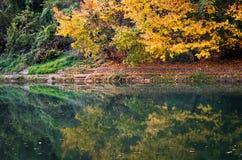 Härligt landskap av skogen reflekterat i floden Arkivbild