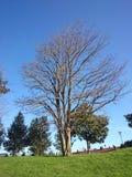 Härligt landskap av torrt bruk för himmel för trädfilial som naturlig bakgrund, bakgrund arkivbild