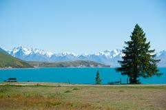 Härligt landskap av trädgård, laken och snowberg på laken Tekapo, den södra ön som är nyazeeländsk Arkivbilder