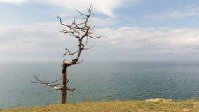 Härligt landskap Ensamt torrt träd på sjökusten Tid schackningsperiod stock video