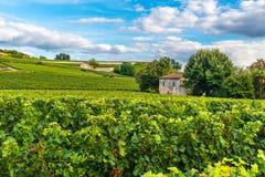 Härligt landskap för Bordeaux vingårdar av den Saint Emilion vingården i Frankrike arkivbilder