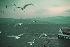 Härligt landskap för Seagull och för fartyg arkivfoto