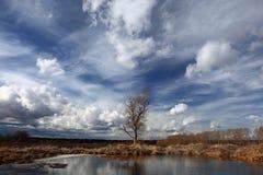 Härligt landskap för vår i fält royaltyfri fotografi