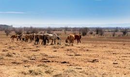 härligt landskap, flocken av hästar som betar i fältet royaltyfri bild