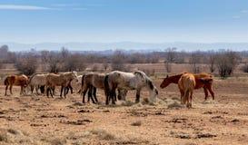 Härligt landskap, flocken av hästar som betar i filden, i lantgården, bygd royaltyfri bild