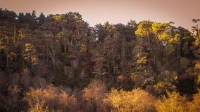 Härligt landskap Fort Bragg Kalifornien Royaltyfri Bild