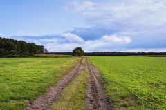 Härligt landskap, grönt gräs, fält, väg Arkivbilder