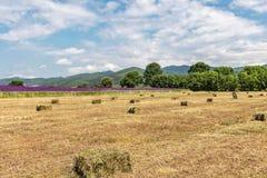 Härligt landskap, gult fält med höstackar, lila blommor, gröna träd och berg och blå himmel med stora vita moln royaltyfria bilder