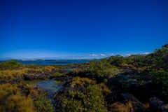Härligt landskap i den vulkaniska Rangitoto ön i Auckland, i en solig dag med en härlig blå himmel Royaltyfri Fotografi