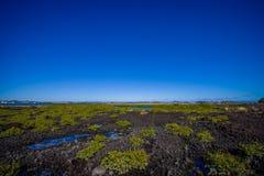 Härligt landskap i den vulkaniska Rangitoto ön i Auckland, i en solig dag med en härlig blå himmel Fotografering för Bildbyråer