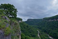 Härligt landskap i en bergdal Grön lövverknolla för sommar Arkivbilder