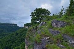 Härligt landskap i en bergdal Grön lövverknolla för sommar Arkivfoton