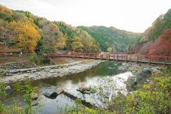 Härligt landskap i höst på Korankei, Japan Royaltyfri Foto