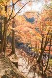 Härligt landskap i höst på Korankei, Japan Fotografering för Bildbyråer