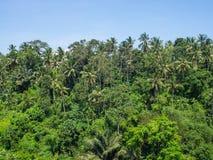 H?rligt landskap i indonesia arkivbilder