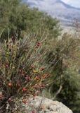Härligt landskap i Kreta Fotografering för Bildbyråer