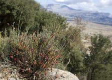 Härligt landskap i Kreta Arkivbild