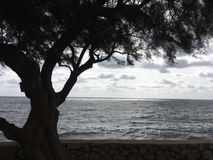 Härligt landskap i Mallorca Arkivbild