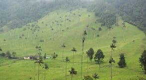 Härligt landskap i Valle de Cocora, Salento, Colombia Arkivfoto