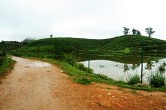 Härligt landskap med banan, träd och sjön Arkivfoto