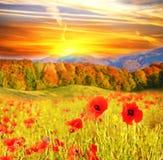 Härligt landskap med blommavallmo på en bakgrund av moun Royaltyfri Bild