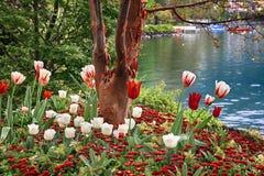 Härligt landskap med blommor och sjöGenève, Montreux, Swit Royaltyfria Foton