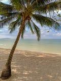 Härligt landskap med den ensamma kokospalmen arkivbilder