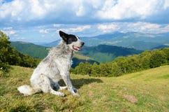 Härligt landskap med en hund på en bakgrund av berg och royaltyfria foton