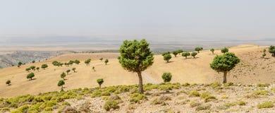 Härligt landskap med enkla träd av kartbokbergen i Marocko, Nordafrika Royaltyfria Bilder