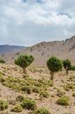 Härligt landskap med enkla träd av kartbokbergen i Marocko, Nordafrika Fotografering för Bildbyråer