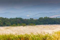 Härligt landskap med fält Arkivfoto