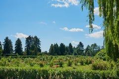 Härligt landskap med granar, blommor, tårpil royaltyfri fotografi