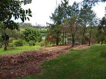 Härligt landskap med härliga träd runt om sjön arkivfoto