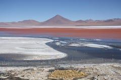 Härligt landskap med Laguna Colorada i Bolivia Arkivfoton