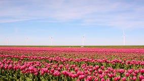Härligt landskap med rosa tulpan mot himlen (naturliga lodisar stock video