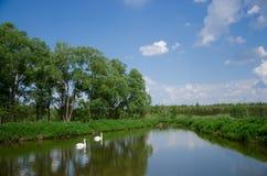 Härligt landskap med sjön och svanar Royaltyfri Bild
