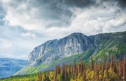 Härligt landskap med skogen, berget och moln Royaltyfria Bilder