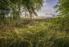 Härligt landskap med sommarskogen och solnedgång royaltyfri fotografi