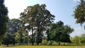 Härligt landskap med stora träd på gräsmatta royaltyfria foton