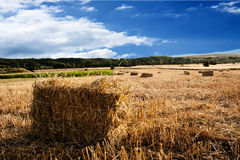 Härligt landskap med sugrörbaler i slut av sommar Royaltyfria Foton