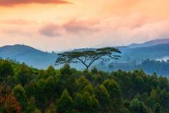Härligt landskap med trees, och berg i engryning haze Fotografering för Bildbyråer
