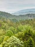Härligt landskap, nordisk skog på kullar royaltyfri foto