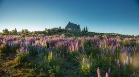 Härligt landskap Nya Zeeland. royaltyfria foton