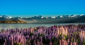 Härligt landskap Nya Zeeland. arkivfoto