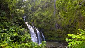 Härligt landskap och tropisk strand med palmträd i Hawaii, USA royaltyfria foton